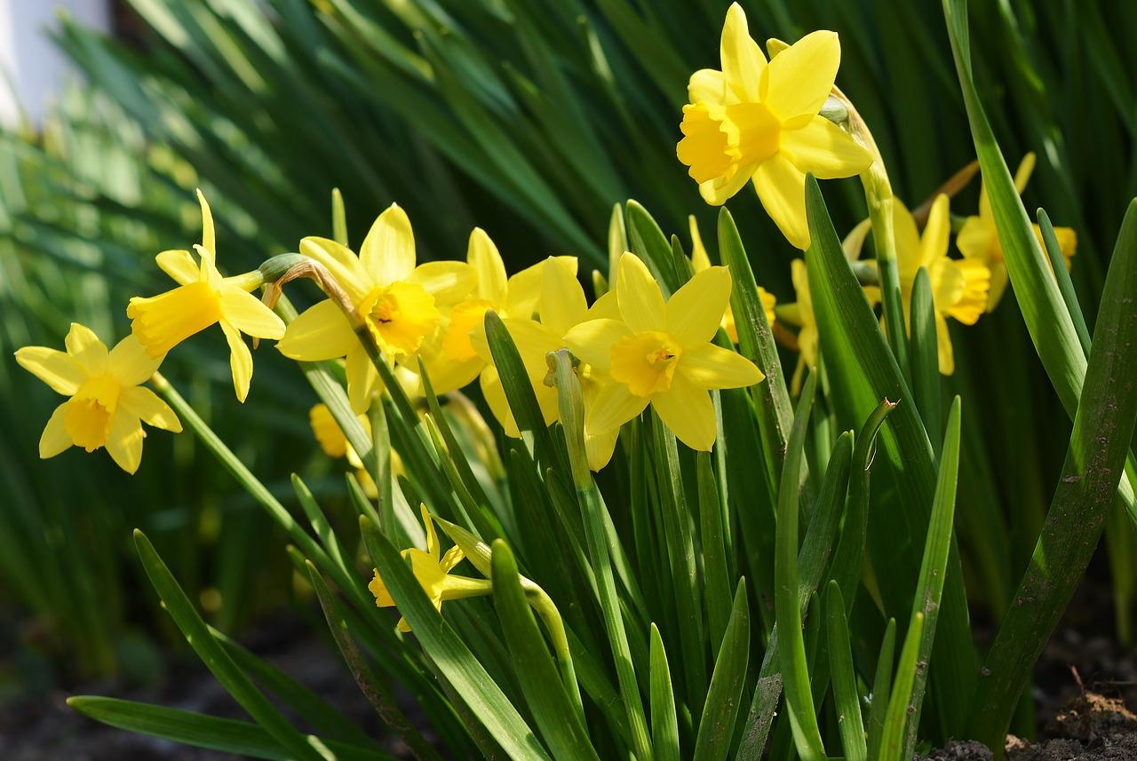Få blommor ger sådant hopp om sommar och värme. - Ullevi restaurang och konferens i Göteborg.